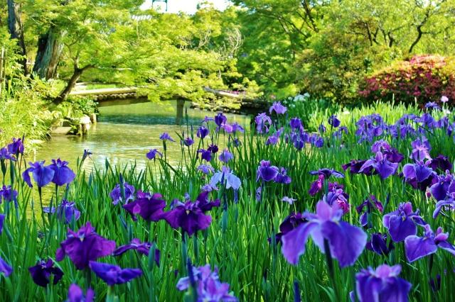 花菖蒲庭園