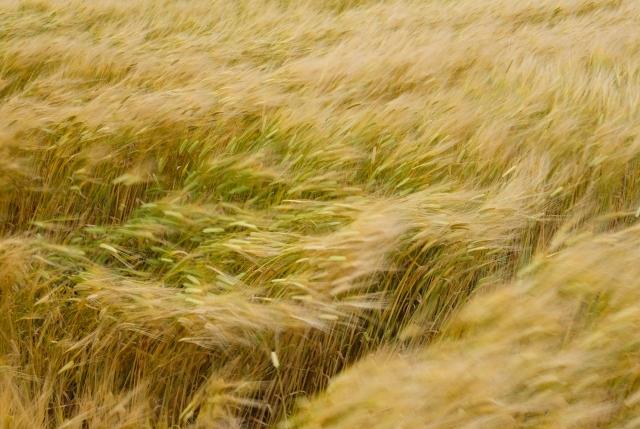 風属性イメージ